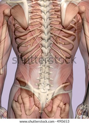 Anatomically correct medical model of the human body, muscles and ligaments showing transparent and skeleton projected into the body. Detail on torso. - stock photo