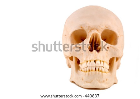 Anatomically correct medical model of the human skull. 12MP camera, isolated.