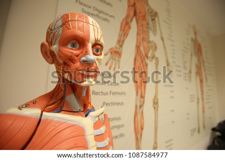 Anatomy is the branch of biology concerned with the study of the structure of organisms and their parts #1087584977