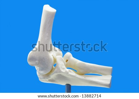 Anatomy model from human elbow on blue background