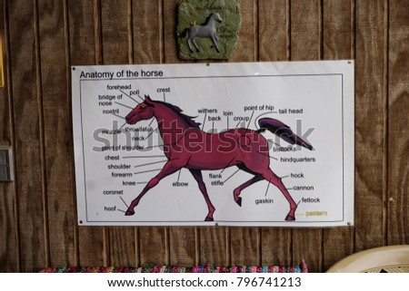 Free Photos Horse Anatomy Avopix