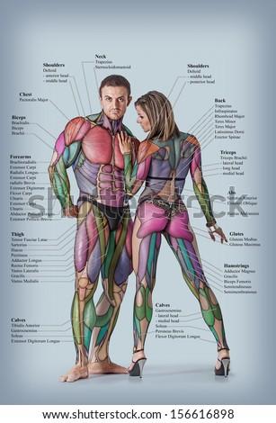 Free photos Muscle man , male Body Anatomy | Avopix.com