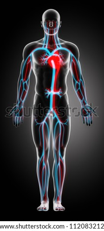 Anatomy of the Cardiovascular System     **** Also as footage available in my portfolio