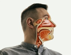 Anatomy of the mouth, throat and nose on man portrait.