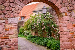 Ancient arched entrance to the castle and Big rose bush on old brick wall background. Flowering Climbing roses plant above vintage red stone fence