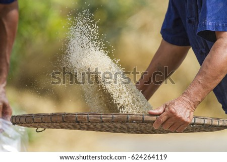 Ancient asian farmer winnowing rice by using bamboo basketwork