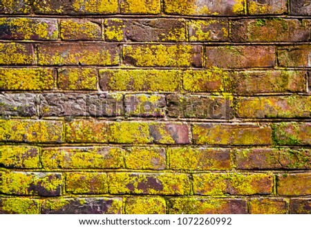 Ancient Brick wall surface covered with lichen. It means good enviromental conditions.