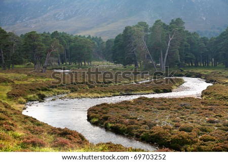 Ancient caledonian Pine Forest in the Cairngorm mountains of Scotland.