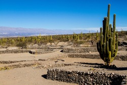 Ancient civilizations left prosperous cities in the provinces of northwestern Argentina, now in ruins