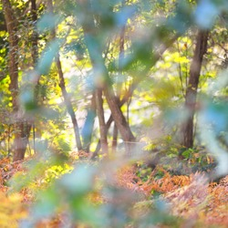 Ancient forest during fall season. Moss, fern, colorful leaves, plants, tree silhouettes. Carnac, Brittany, France. Autumn colors. Seasons, travel destinations, environmental conservation, ecosystems