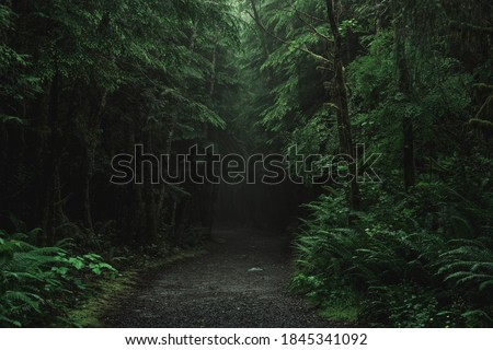 Ancient forests in Vancouver Island. Beautiful trees and mossy forests with tall trees. Сток-фото ©