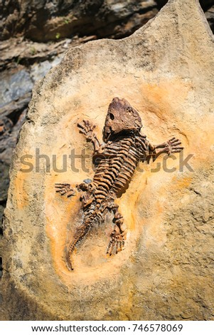 Ancient fossil imprint. Reptile skeleton on surface ground stone. Archeology and paleontology concept. Prehistoric extinct animal dinosaur. #746578069