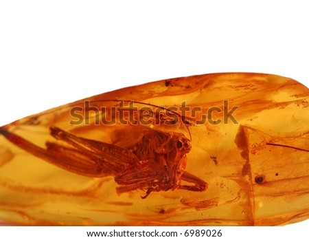 Ancient grasshopper for amber - stock photo