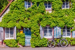 Ancient house with blue wooden shutter, door and bike. Old vintage rustic German shabby small house with Green leaves Virginia creeper vine Parthenoci