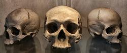 Ancient human skull and bone decorations in Sedlec, Czech republic.