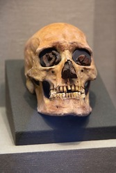 Ancient human skull in the museum.