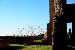 Ancient Roman Ruins - Birds Flying