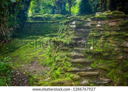 Ancient ruins covered in moss in Colombia, South America