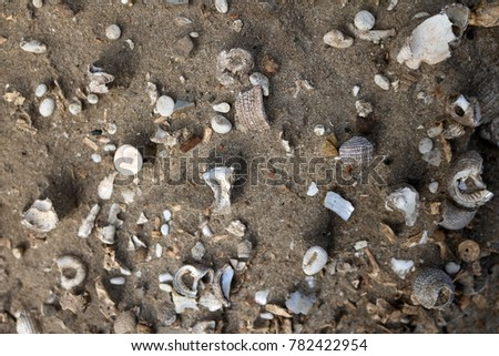 Ancient shells in the soil and sand.   #782422954