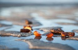 Ancient stone. Pieces of solar amber are reflected in the ice of frozen sand on the shore of the Baltic sea. Nuggets, resin, antiquity. Environmental conservation.