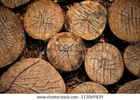 ancient wood circle floor