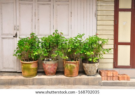 Ancient wooden door and plant-pot. #168702035