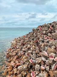 And huge pile of conch shells along the sea coast of Bimini Island in the Bahamas.
