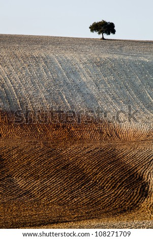 Andalucia lights in rural landscapes and agricultural - stock photo