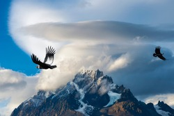 Andean Condors flying over mountains, Torres del Paine National Park, Chilean Patagonia, Chile