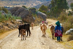 Andean family taking their live stock to grazing pastures in the Andes, Peru, South America