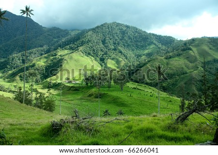 Andean valley and mountains. Cocora Valley, landscape of Quindio, between the mountains of the Cordillera Central in Colombia. Predominates wax palm, Colombia's national tree growing to 60 m.