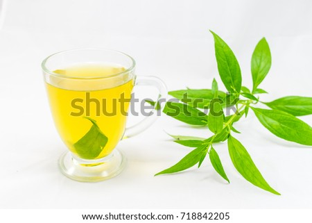 Andrographis paniculata plant on white background Foto stock ©