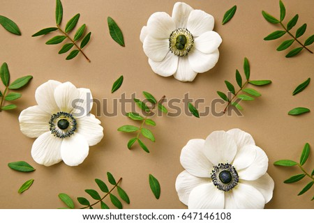 Anemone flowers pattern with green branches. Top view. Neutral background