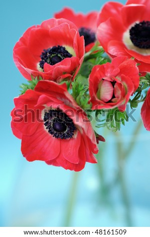 Anemone on blue background