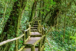 Ang Ka Luang nature trail and cloud forest at Doi inthanon, Chiang Mai, Thailand