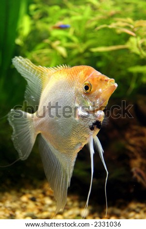 Powered By Articlems From Articletrader Predatory Aquarium Fish - Real