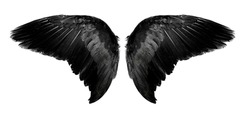 Angel wings an isolated on white background