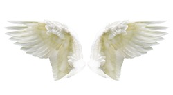 Angel wings, Internal white wing plumage with clipping part