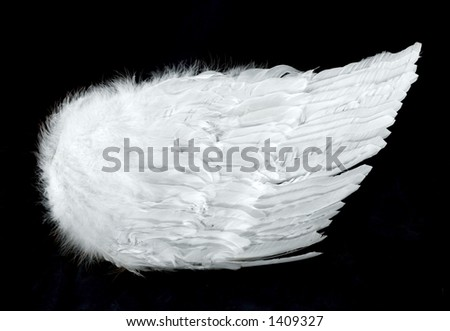 Angel Wings Isolated on Black