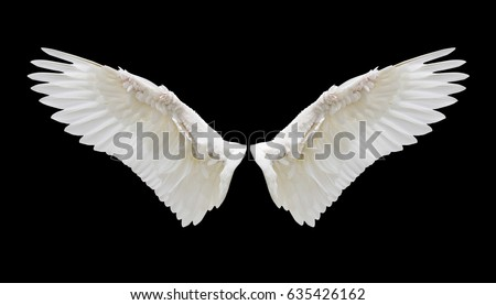Angel wings isolated on black background with clipping part