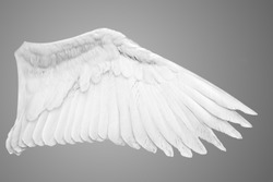 Angel wings isolated on gray background.