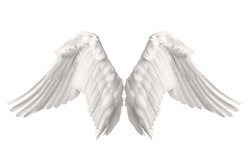 Angel wings isolated on gray background. This has clipping path.