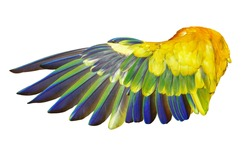 Angel wings isolated on white background. This has clipping path.