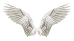 Angel wings isolated on white background with clipping part