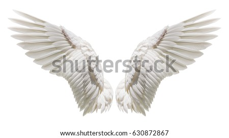Photo of  Angel wings isolated on white background with clipping part