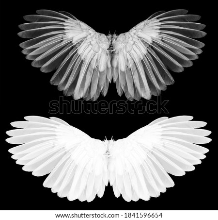 Angel wings isolated on whitebackground Foto stock ©