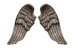 Angel wings, Natural black wing plumage isolated on white background