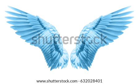 Angel wings, Natural blue wing plumage with clipping part