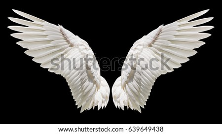 Shutterstock Angel wings, Natural white wing plumage with clipping part