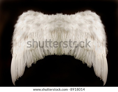 angel wings over a black background - stock photo